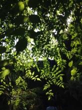 Contrasti di luce