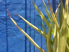 i blu di Marrakech