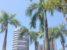 Giungla urbana, Singapore