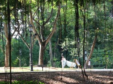 Sposini alla ricerca dello scatto perfetto, Singapore Botanic Gardens